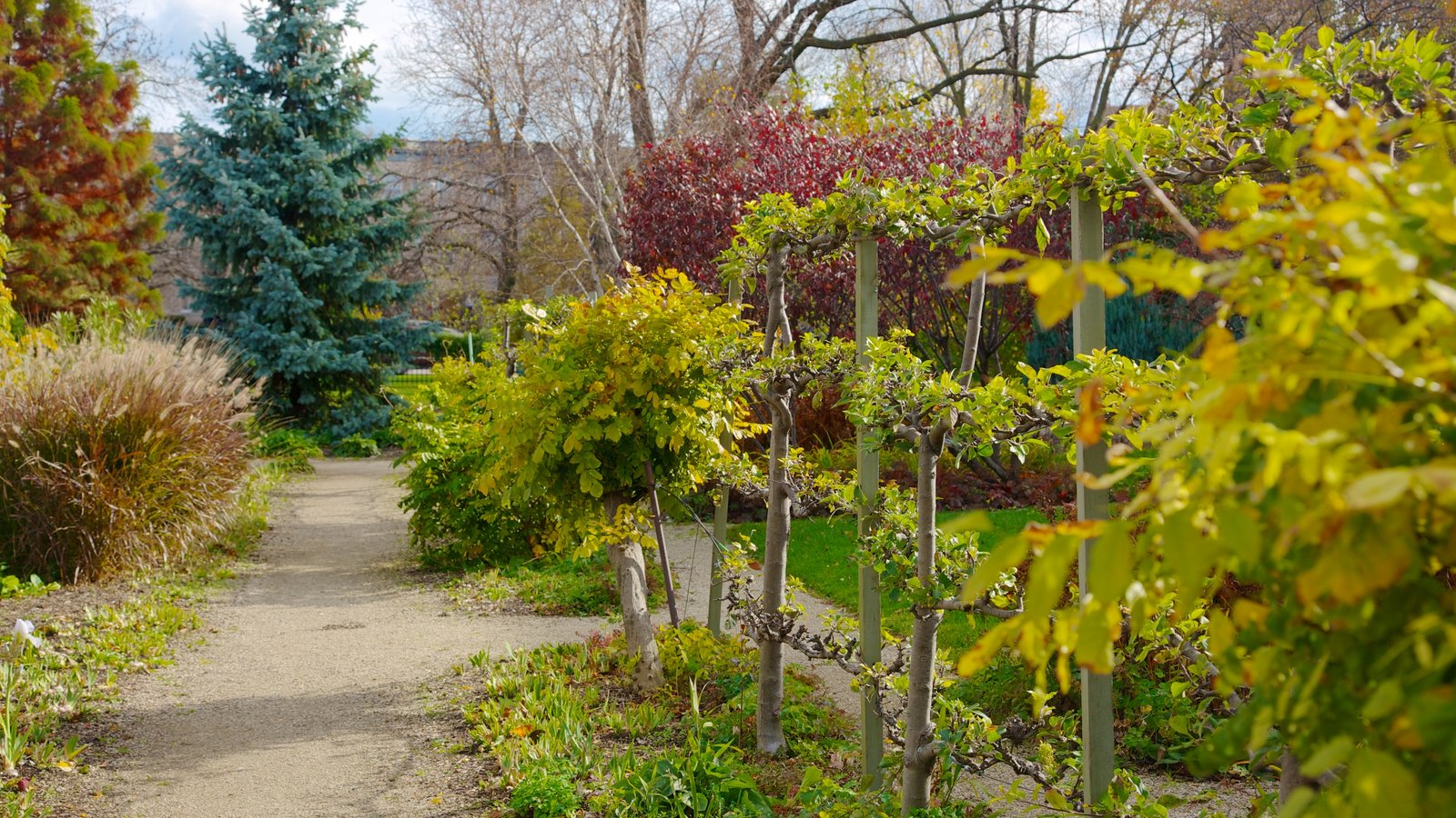 Garfield Park Conservatory showing a park, autumn leaves and landscape views