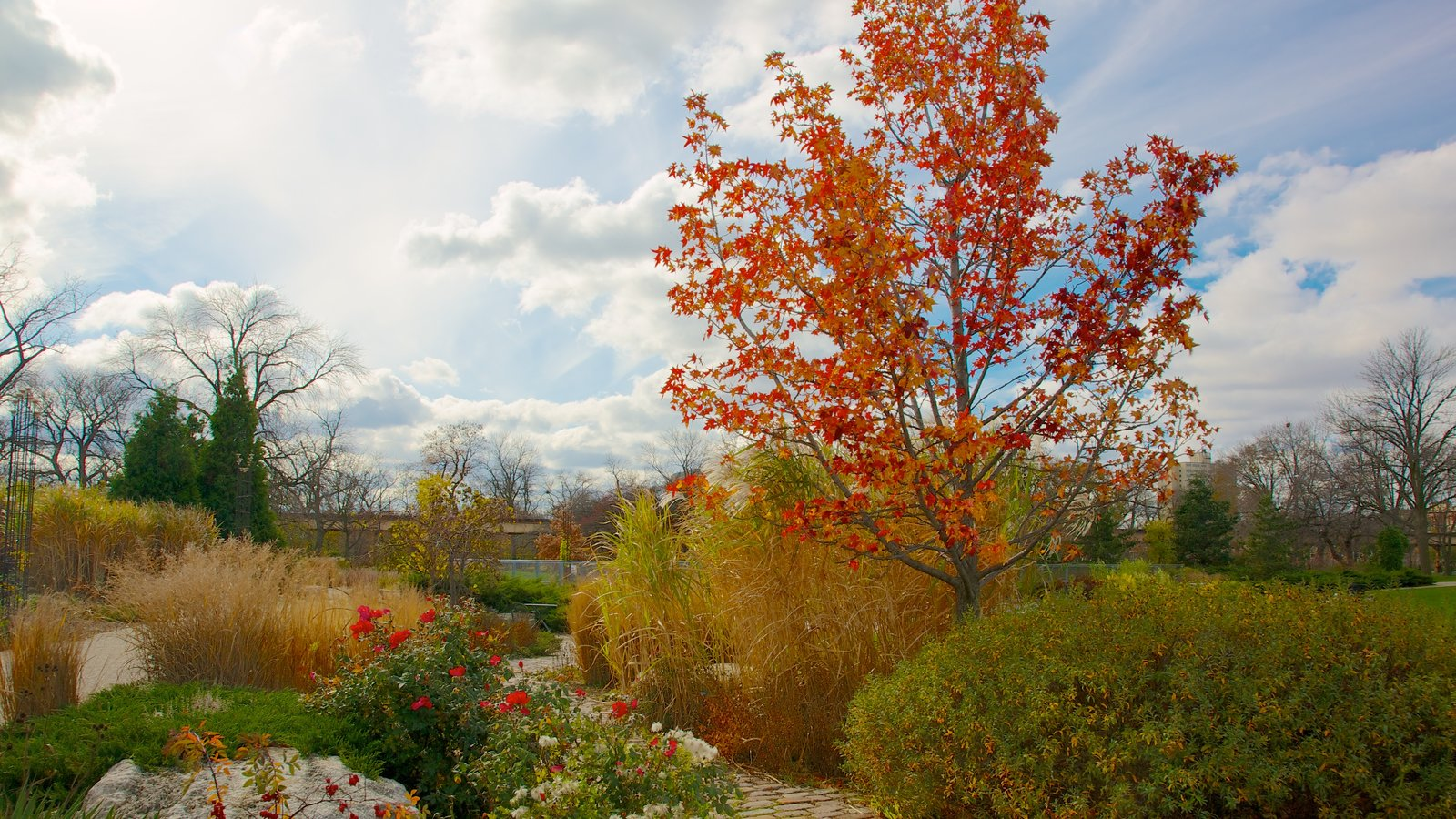 Garfield Park Conservatory featuring fall colors, flowers and wildflowers