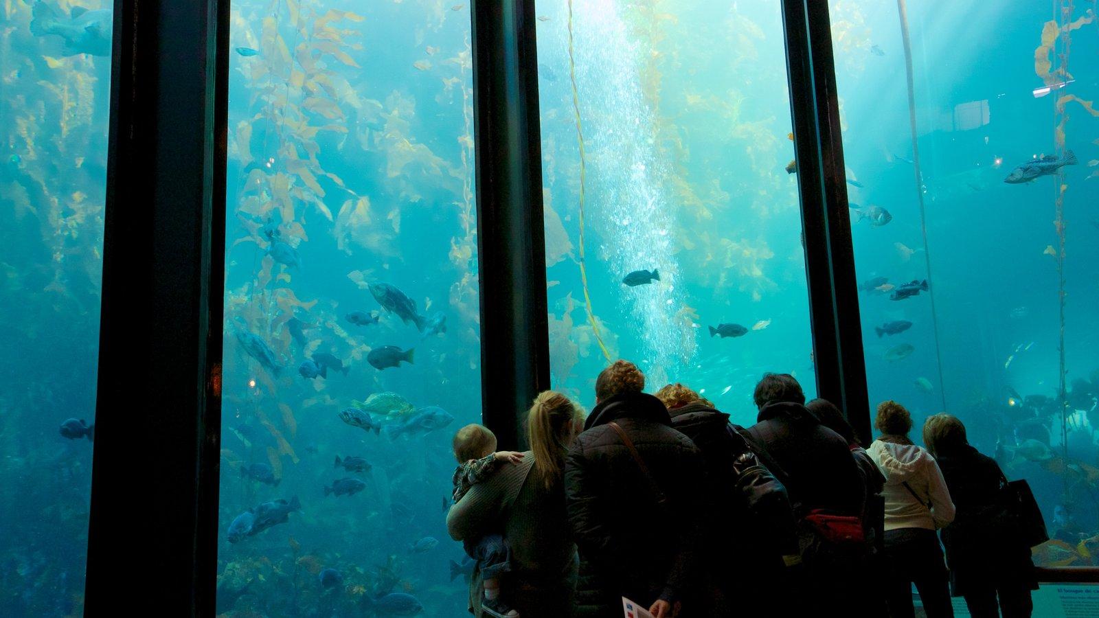 Monterey Bay Aquarium showing interior views, marine life and coral