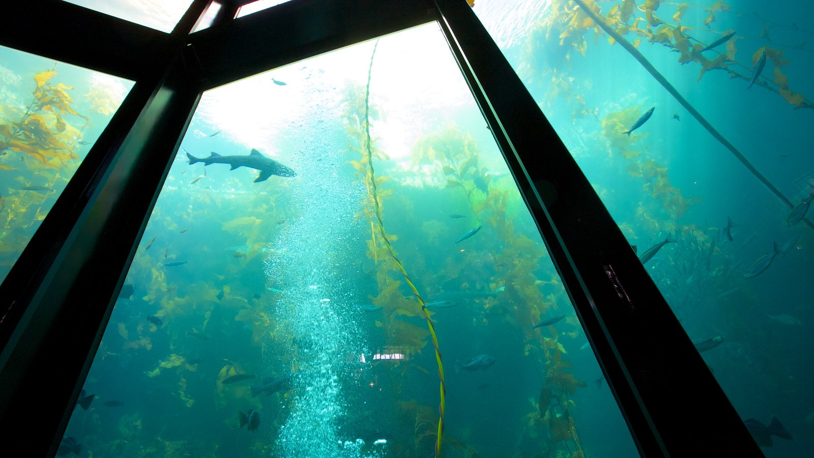 Monterey Bay Aquarium showing interior views and marine life