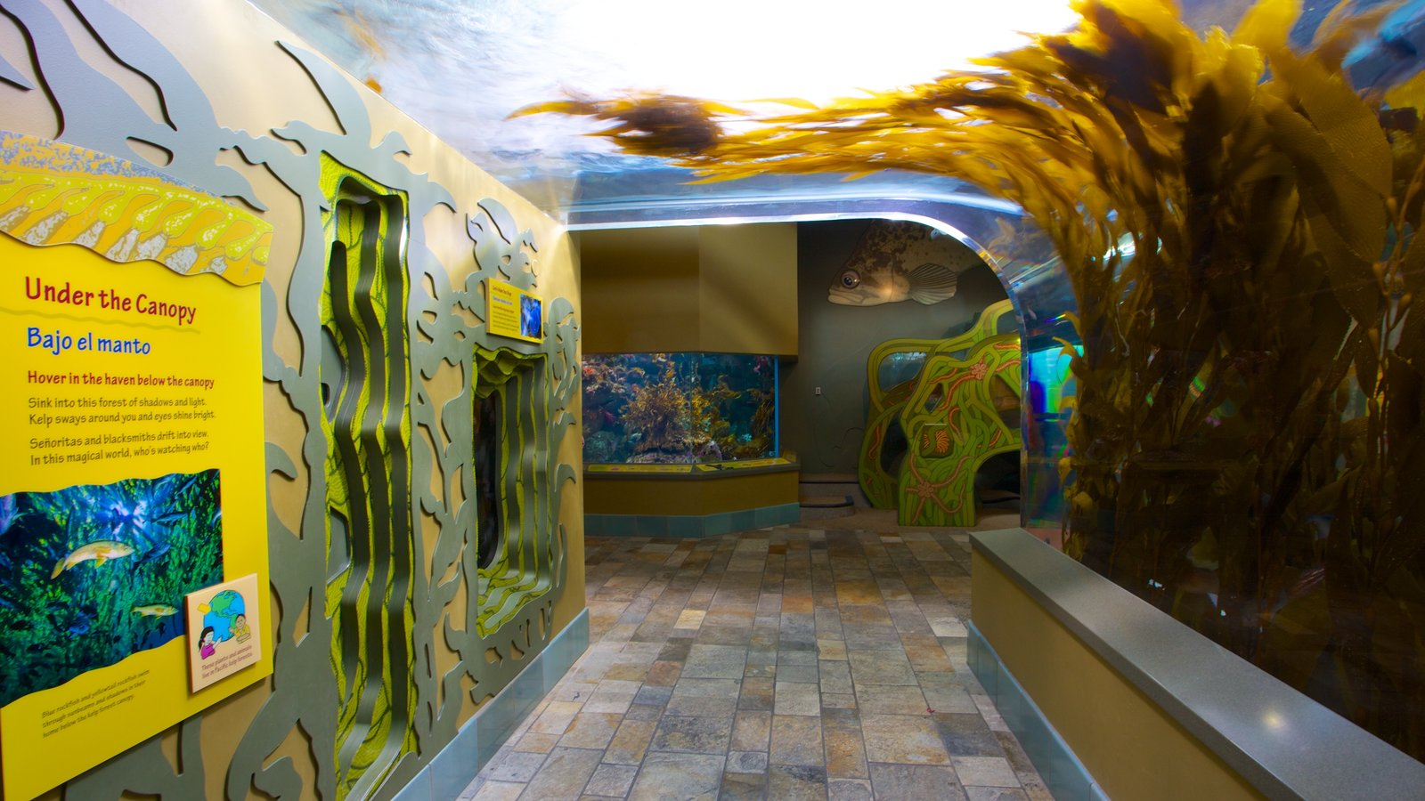 Monterey Bay Aquarium featuring interior views and marine life
