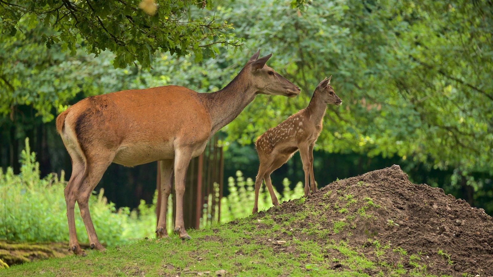 Olderdissen Animal Park showing zoo animals, land animals and cuddly or friendly animals