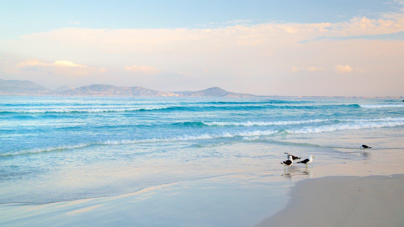 Praia do Forte caracterizando um pôr do sol, paisagens litorâneas e paisagem