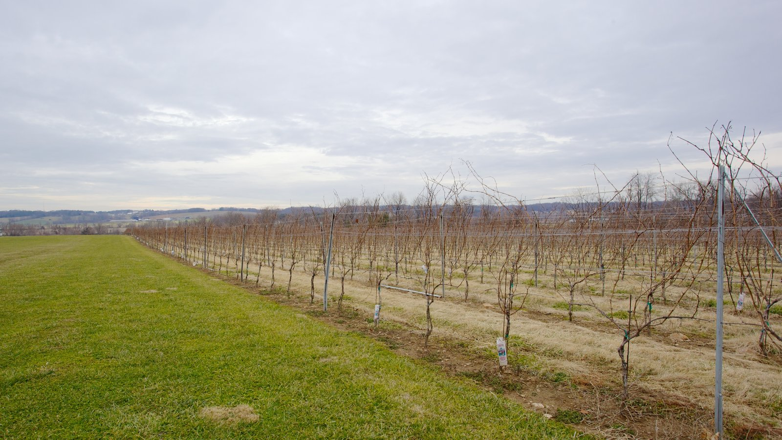 Boordy Vineyards which includes farmland and landscape views