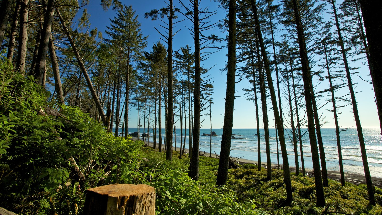 Olympic National Park featuring landscape views, general coastal views and forest scenes