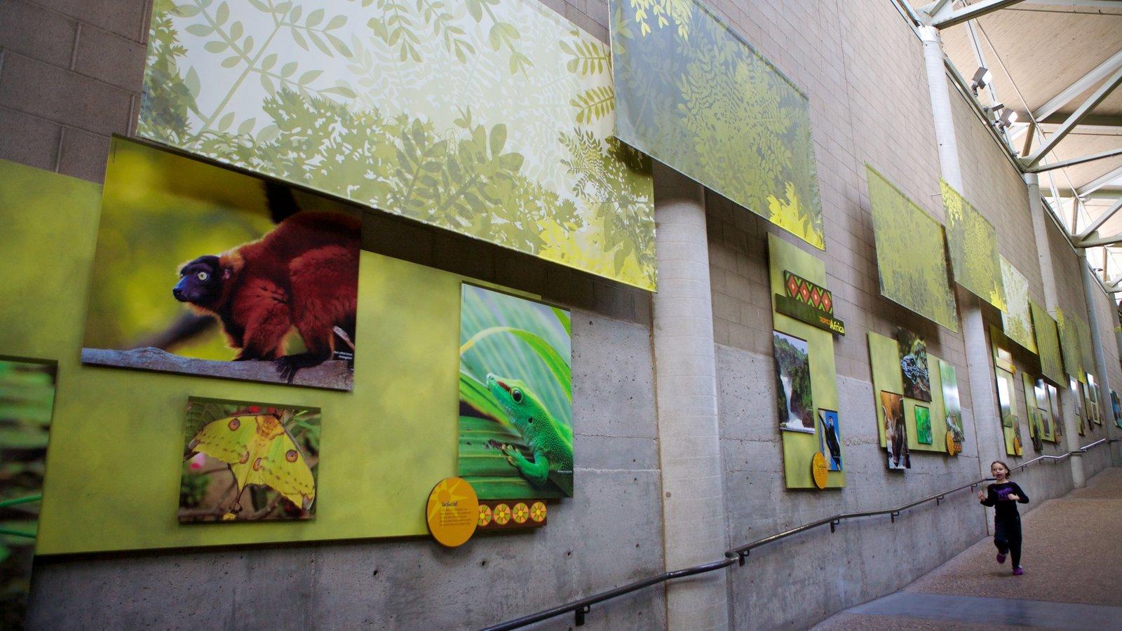 Zoo do Minnesota que inclui animais de zoológico, escalada ou caminhada e vistas internas