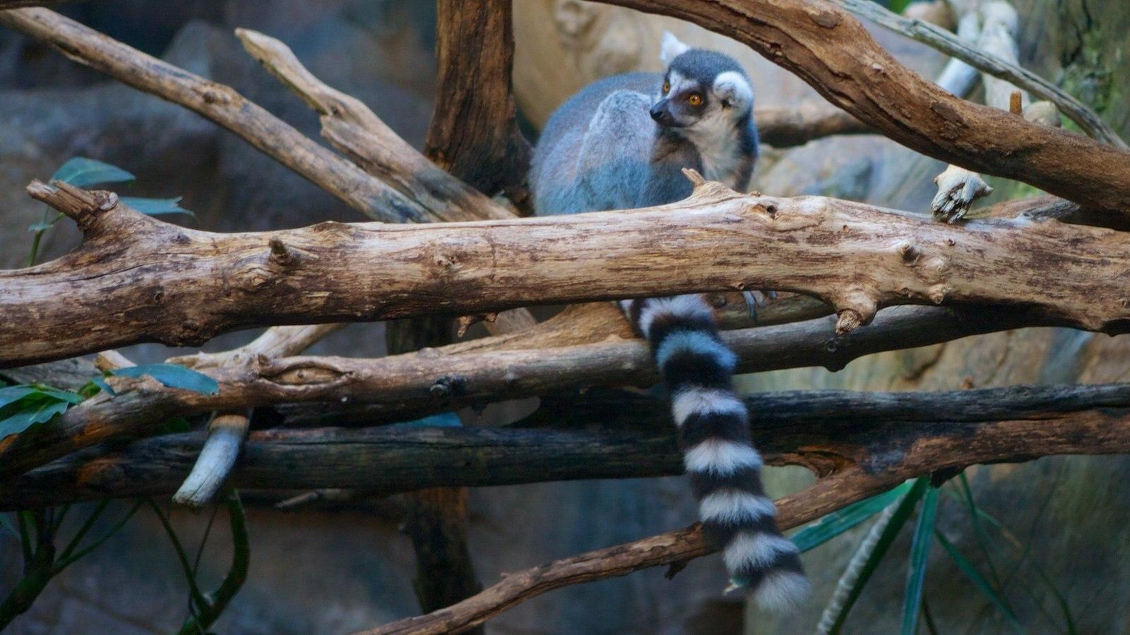 Zoo do Minnesota caracterizando animais de zoológico e animais