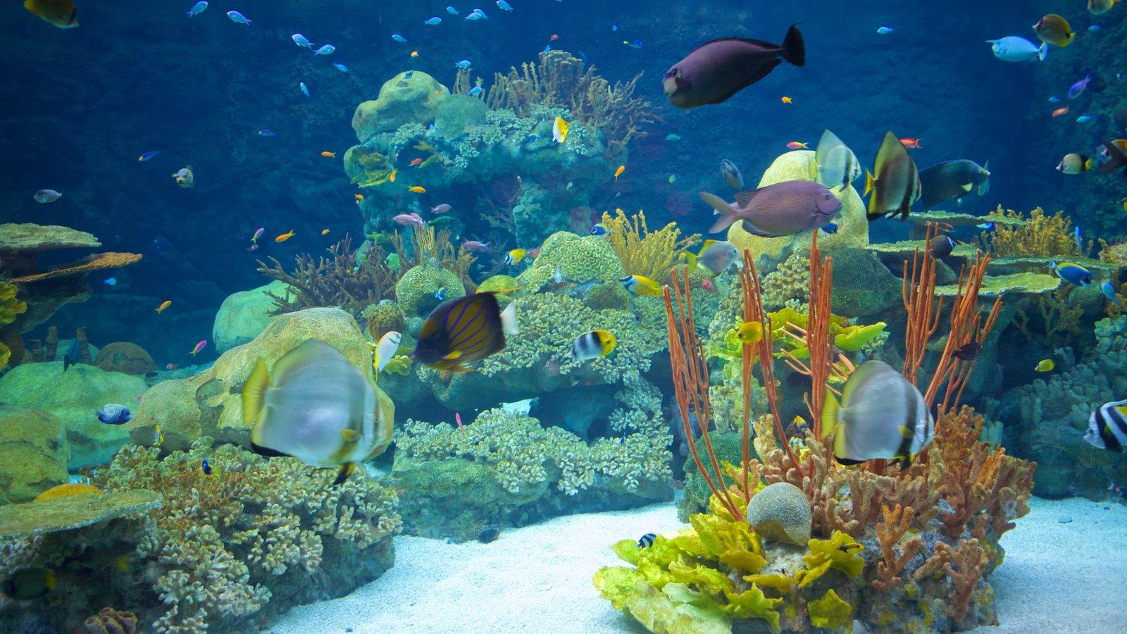 Zoo do Minnesota caracterizando vida marinha, recifes coloridos e animais de zoológico