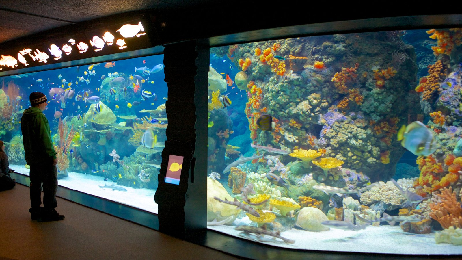Minnesota Zoo which includes zoo animals, marine life and colorful reefs