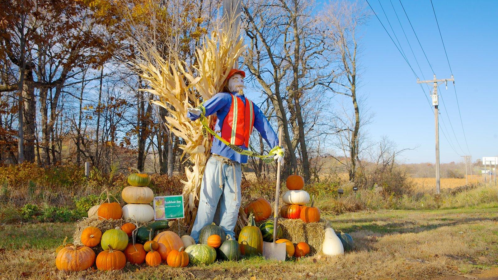 Minnesota Landscape Arboretum mostrando um jardim e folhas de outono