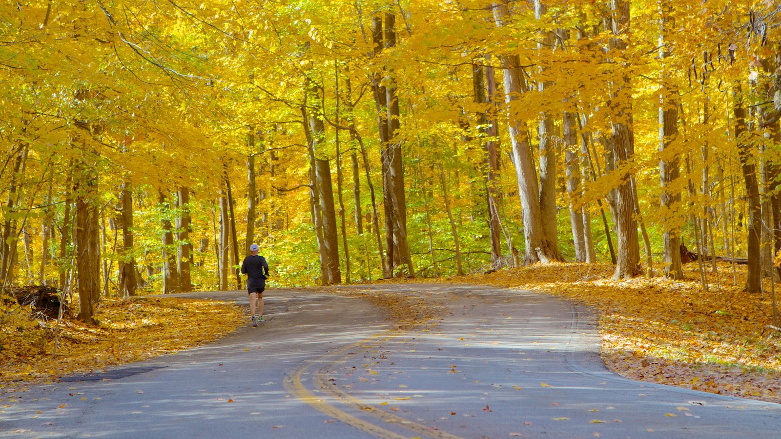 Eagle Creek Park ofreciendo un jardín, hojas de otoño y senderismo o caminata