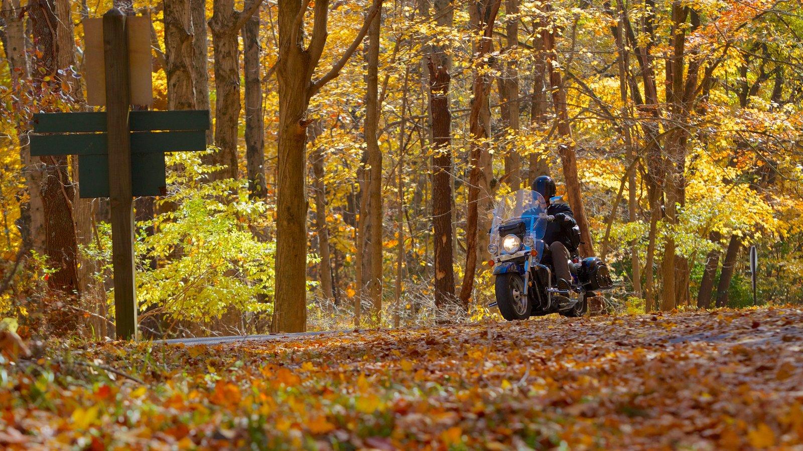Eagle Creek Park mostrando bosques, paseos en moto y vistas de paisajes
