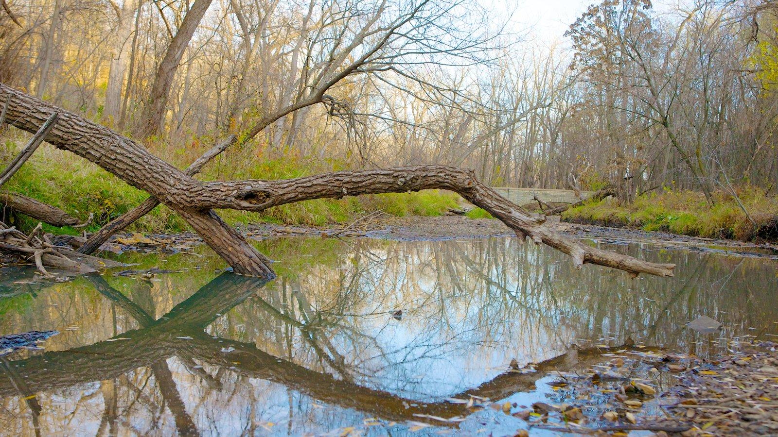 Minnehaha Park caracterizando um parque, paisagem e um lago
