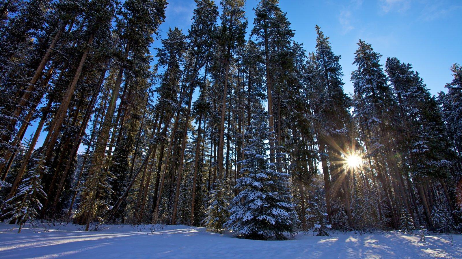 Calgary que incluye escenas forestales y nieve