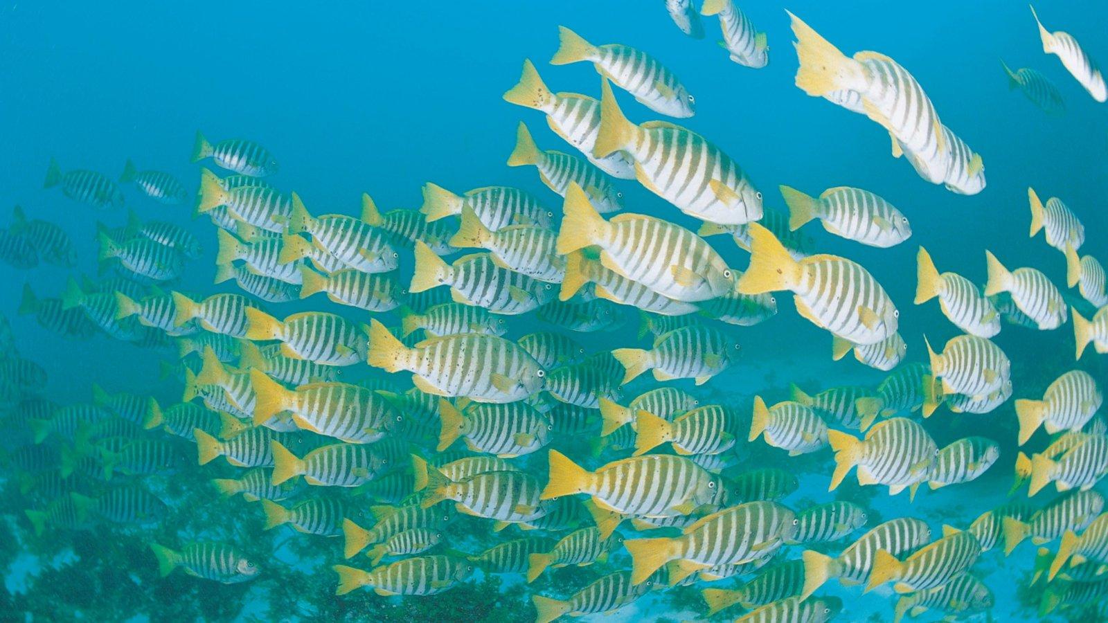 Isla Rottnest que incluye vida marina