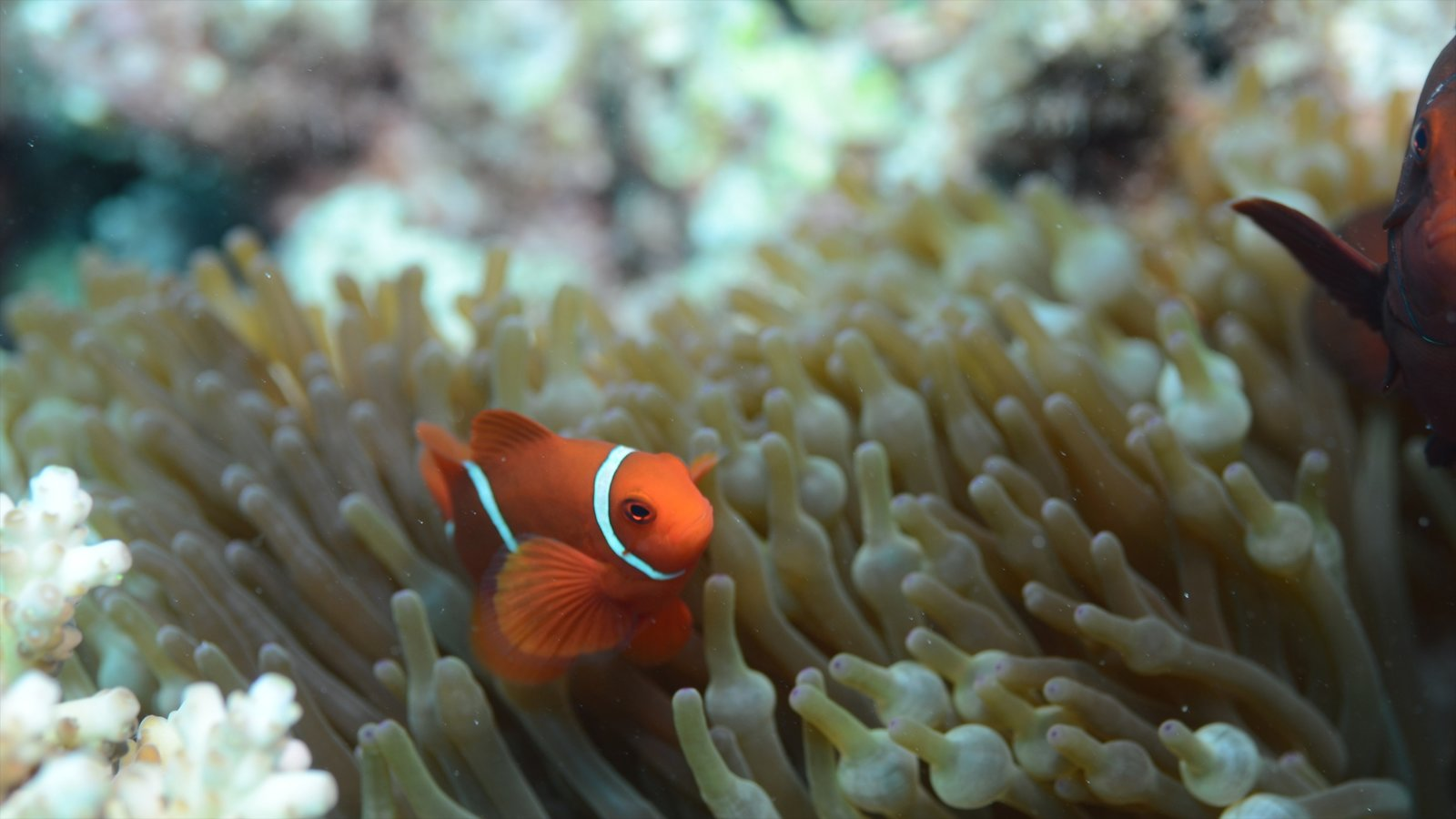Great Barrier Reef which includes colorful reefs and marine life