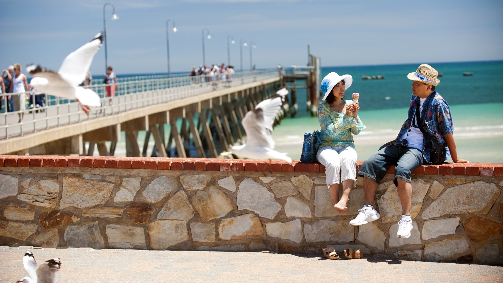 Glenelg Beach featuring views, bird life and general coastal views