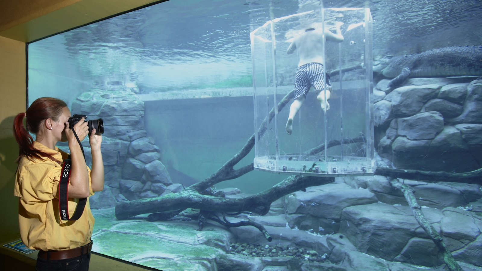 Crocosaurus Cove showing interior views and marine life as well as an individual femail