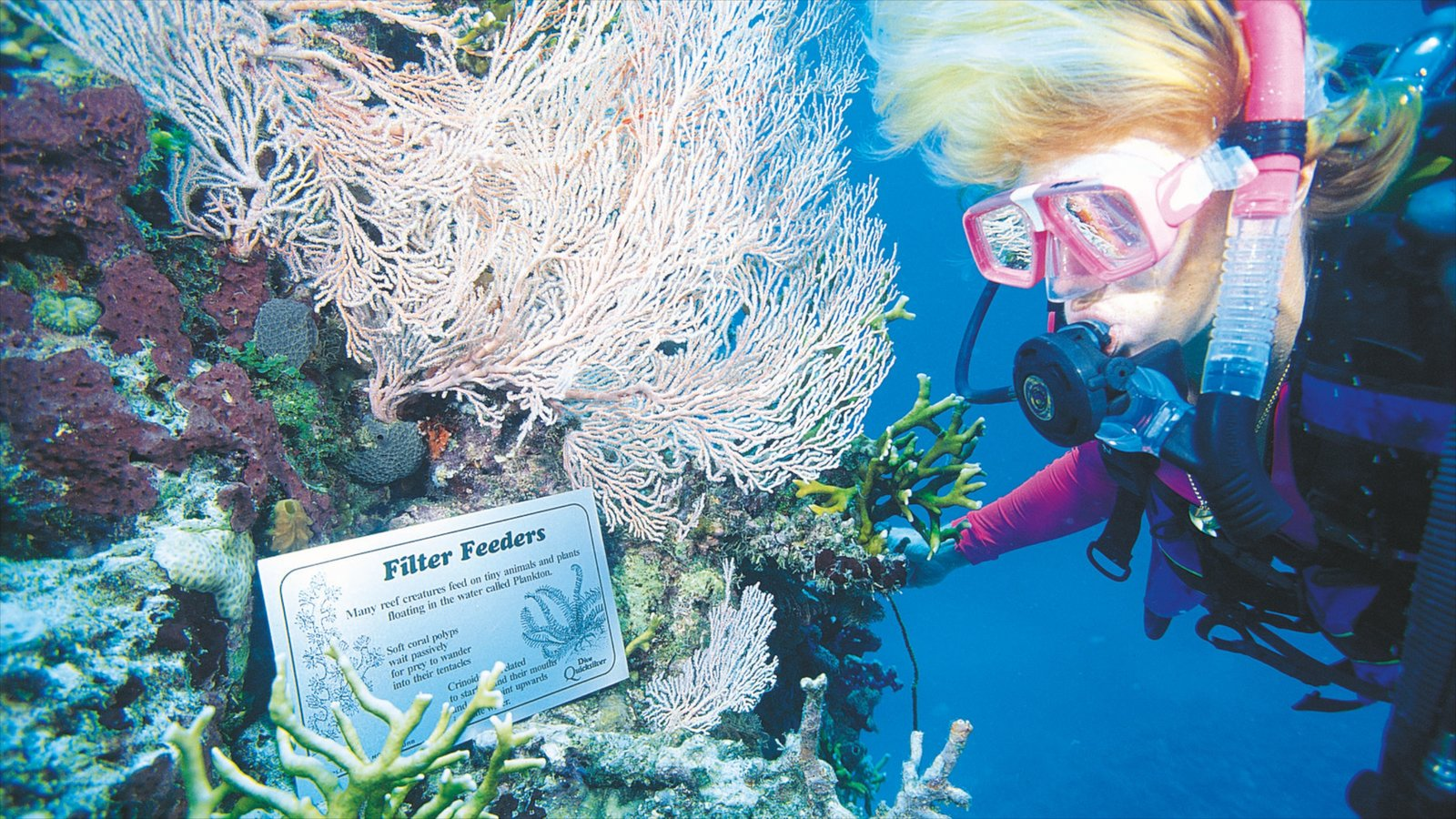 Port Douglas showing diving, colorful reefs and signage