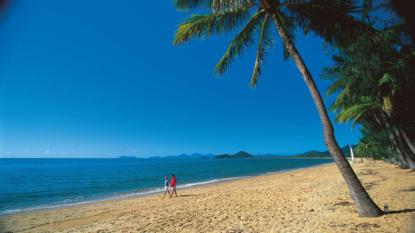 Palm Cove que incluye escenas tropicales, una playa y vistas de paisajes