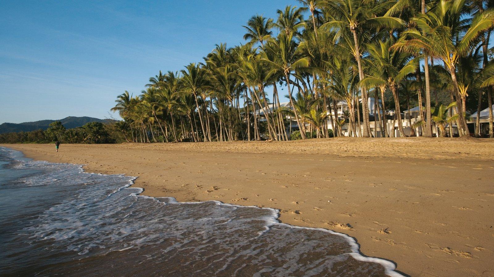 Palm Cove que incluye escenas tropicales, vistas de paisajes y una playa de arena