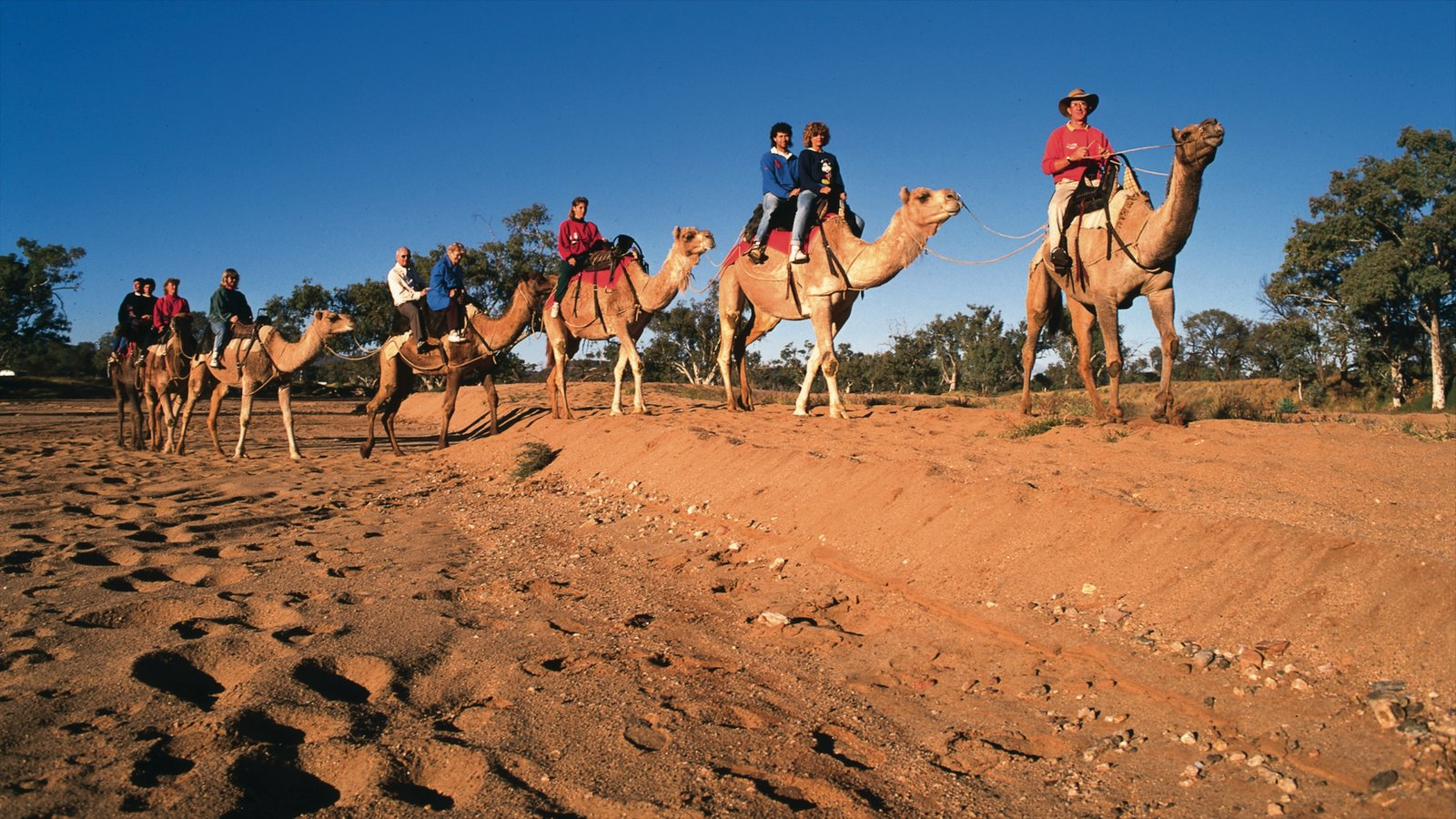 Alice Springs showing desert views, horseriding and land animals
