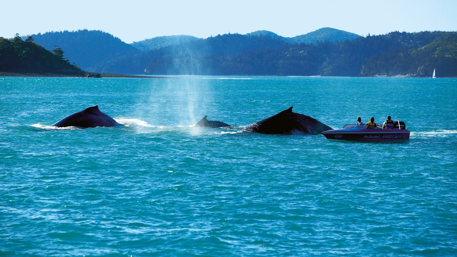 Whitsunday Islands which includes general coastal views, landscape views and marine life