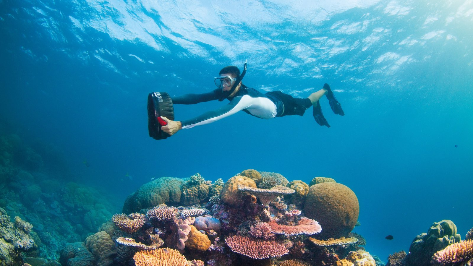 Whitsunday Islands showing marine life and colorful reefs as well as an individual male