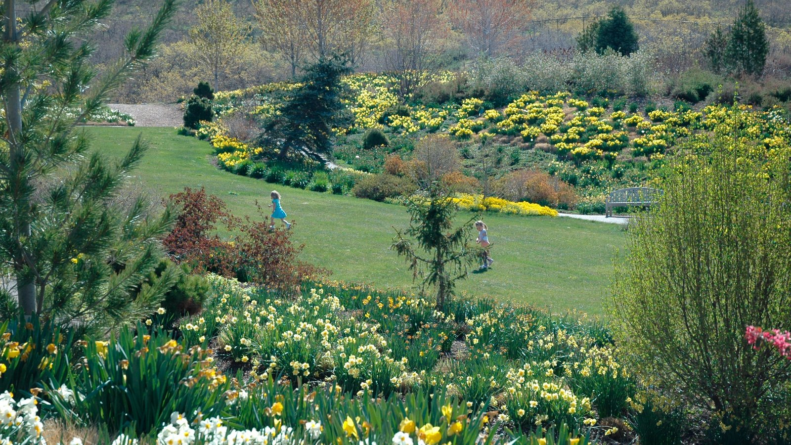 Red Butte Garden and Arboreteum showing flowers, landscape views and wildflowers