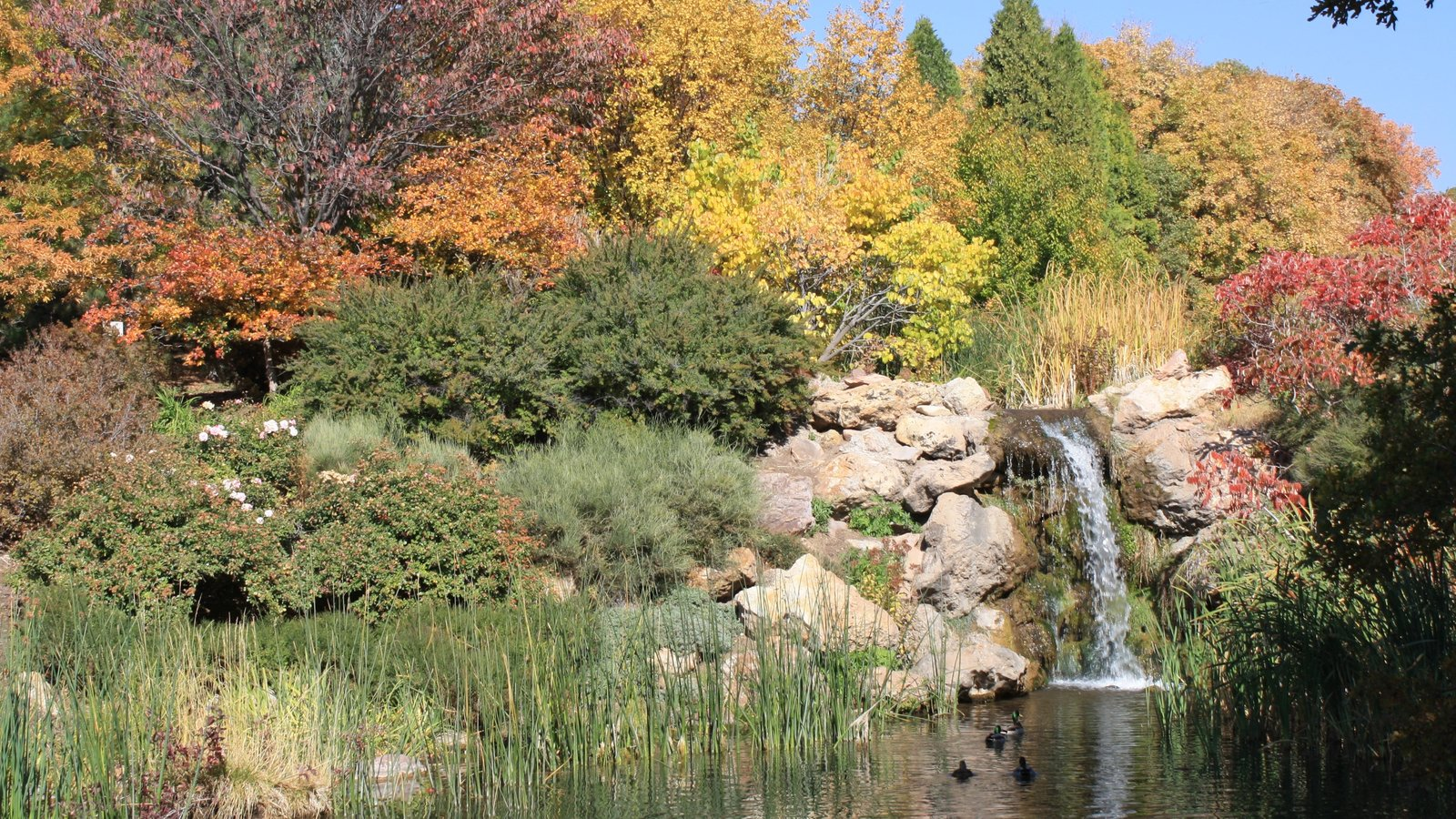 Red Butte Garden and Arboreteum featuring fall colors, a park and a lake or waterhole