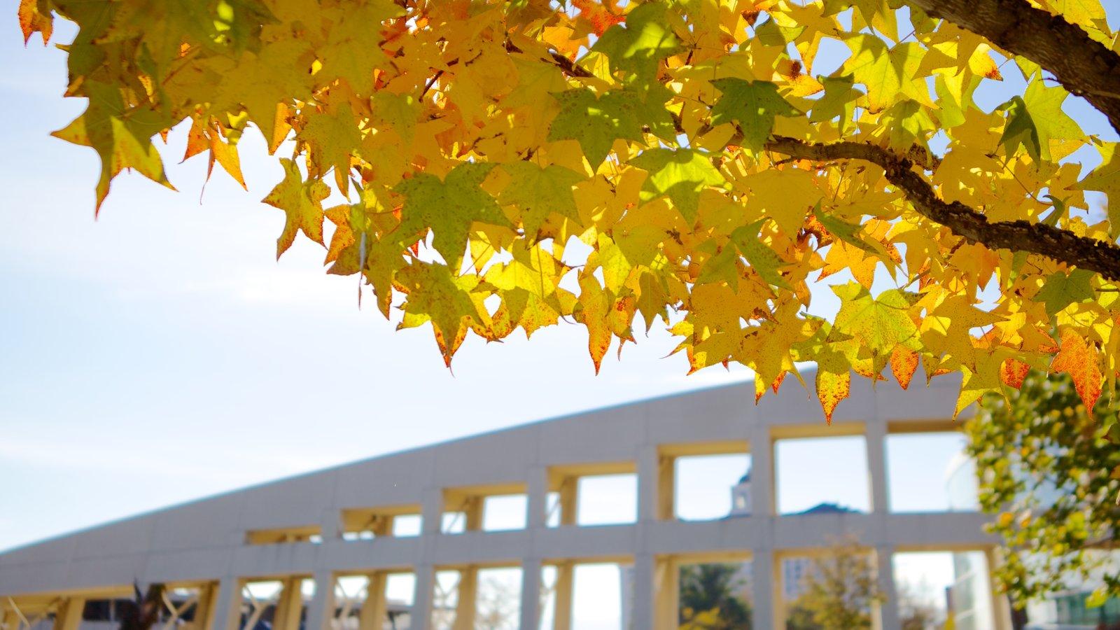 Edifício Principal da Biblioteca Pública de Salt Lake caracterizando arquitetura moderna e folhas de outono