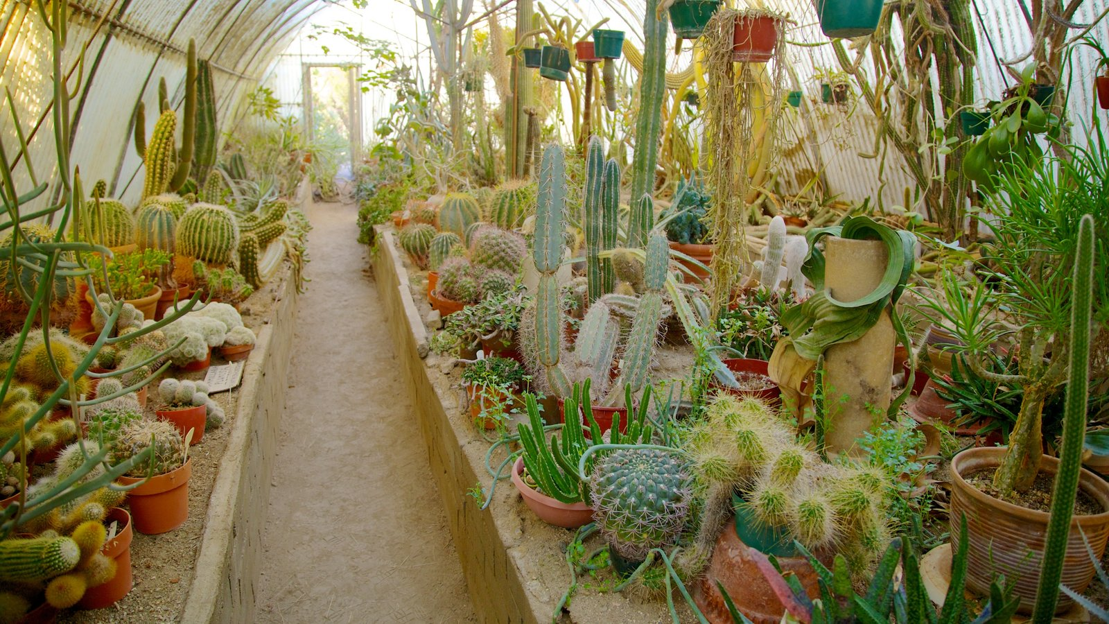 Flowers pictures view images of palm springs moorten botanical garden and cactarium showing flowers interior views and a park mightylinksfo