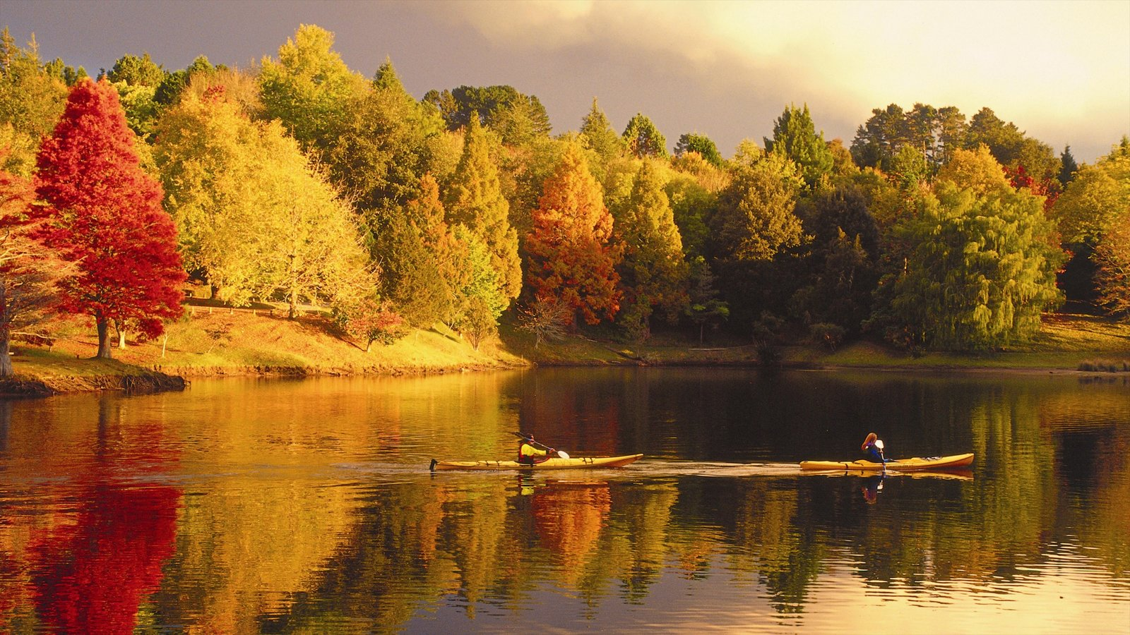 Tauranga showing fall colors, forest scenes and landscape views