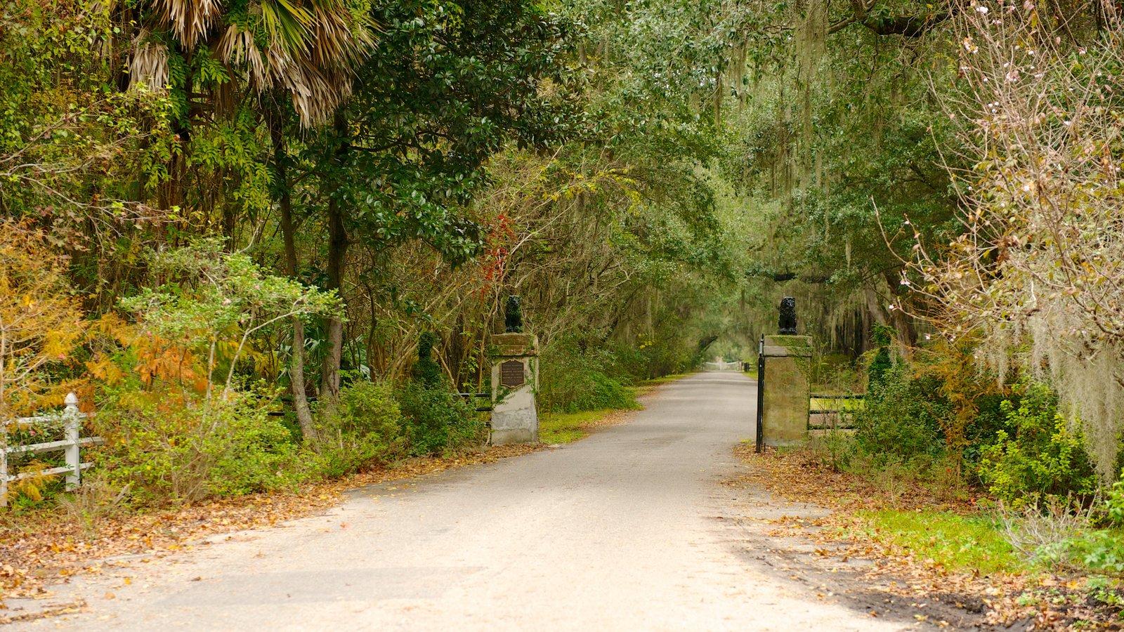Magnolia Plantation and Gardens mostrando paisagem e um parque