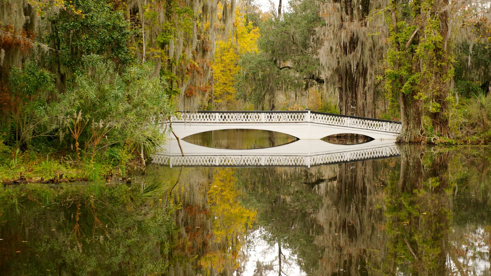 Magnolia Plantation and Gardens which includes a bridge, forests and landscape views