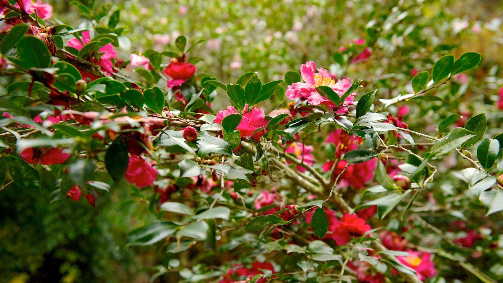 Magnolia Plantation and Gardens caracterizando um parque, flores silvestres e flores