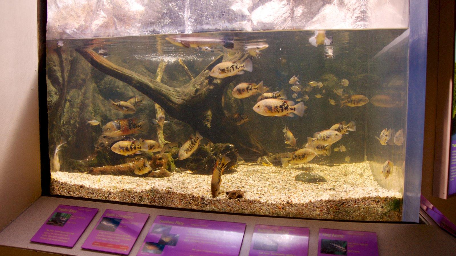 Newport Aquarium mostrando vida marinha e vistas internas
