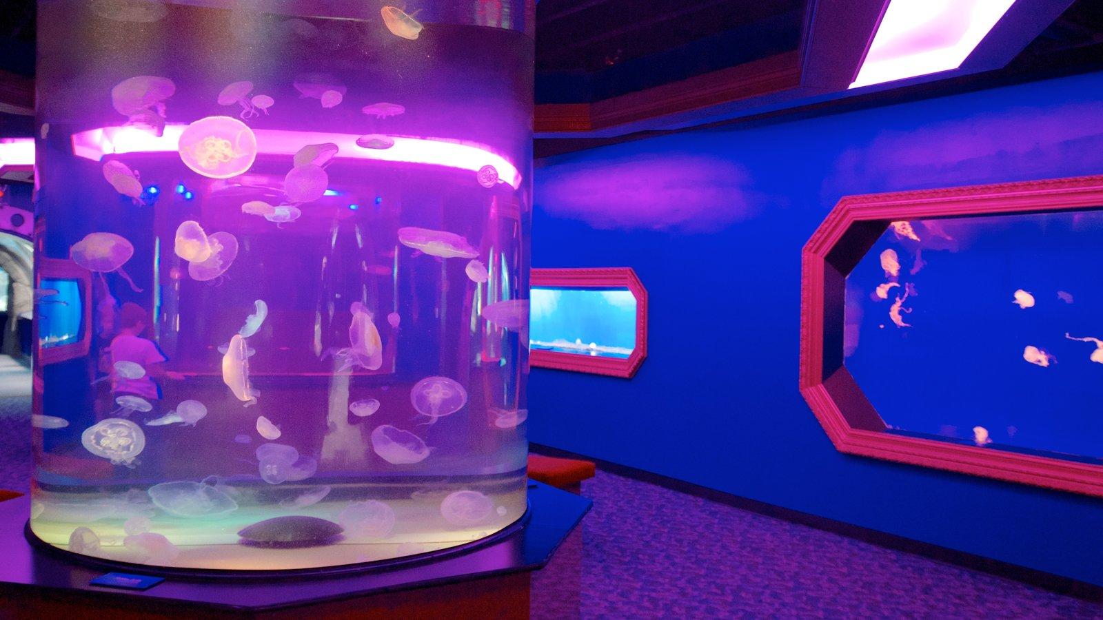 Newport Aquarium caracterizando vistas internas e vida marinha