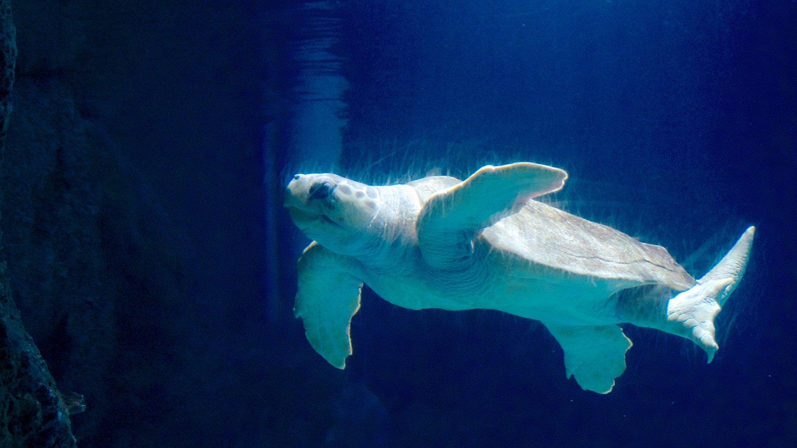 Newport Aquarium que inclui vida marinha