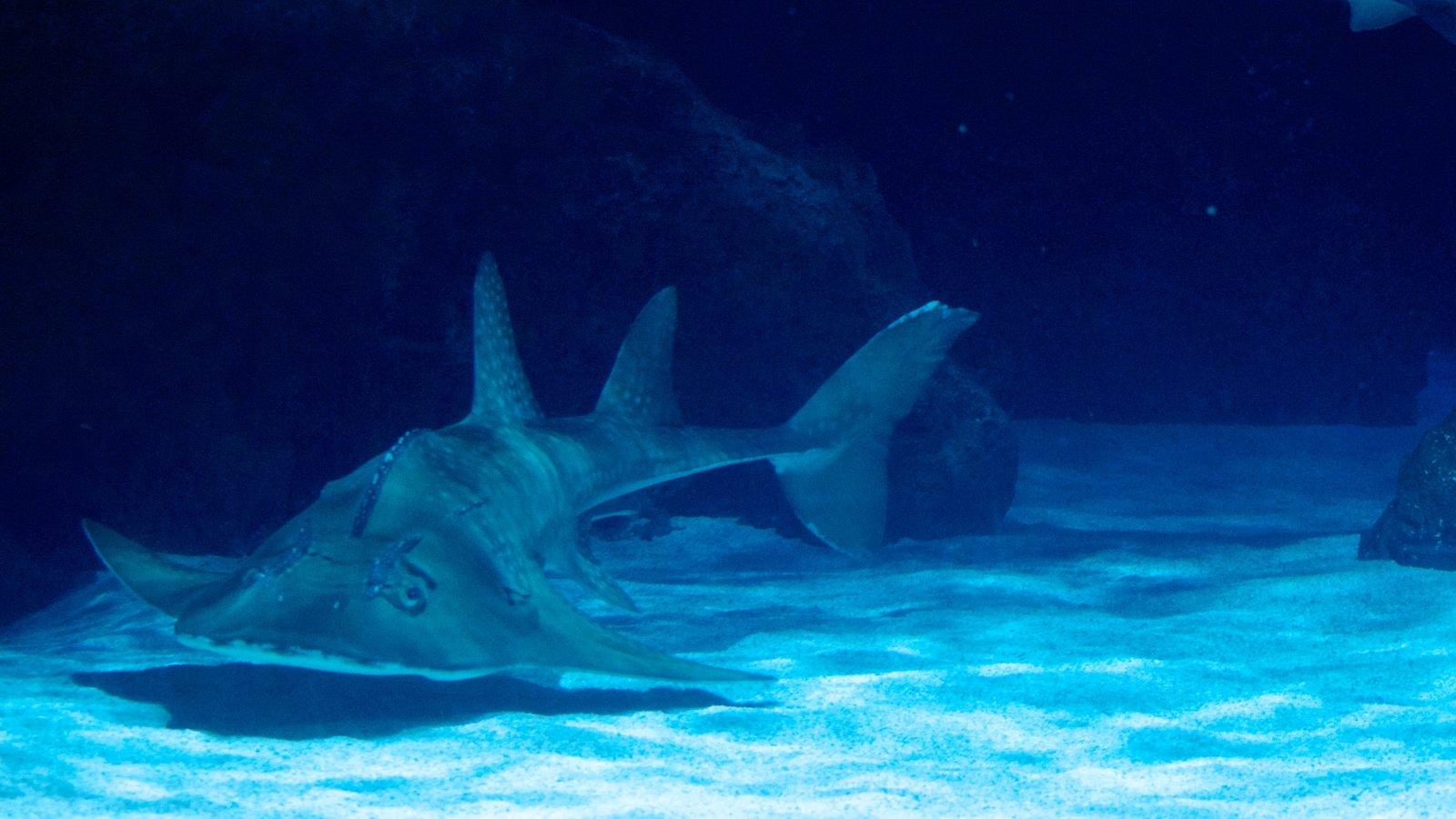 Newport Aquarium caracterizando vida marinha
