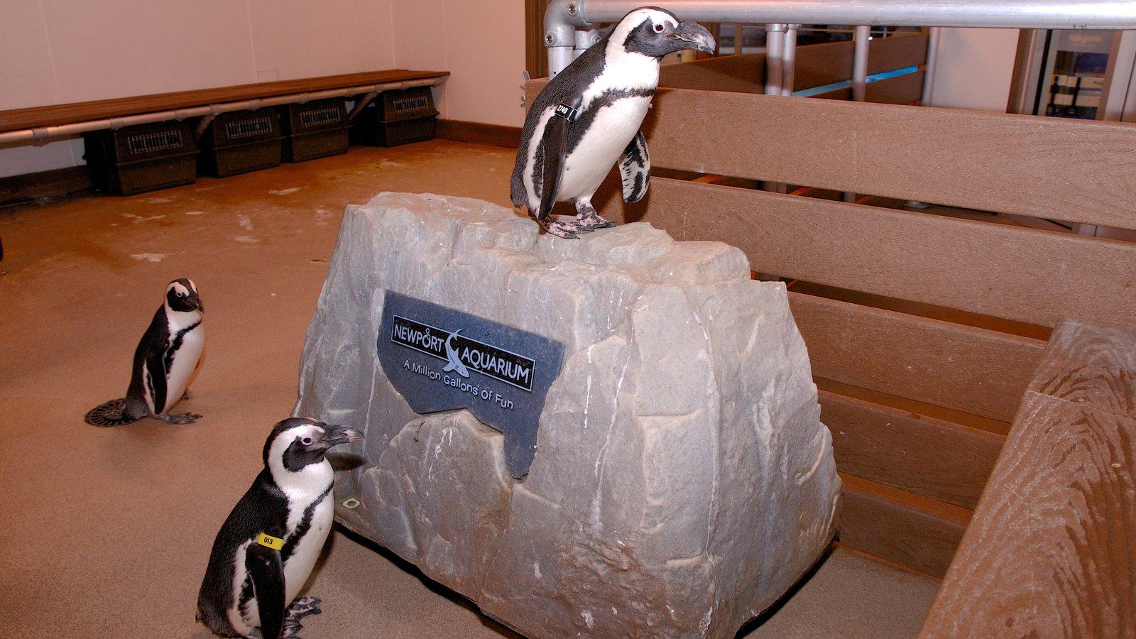 Newport Aquarium que inclui vistas internas, vida das aves e vida marinha