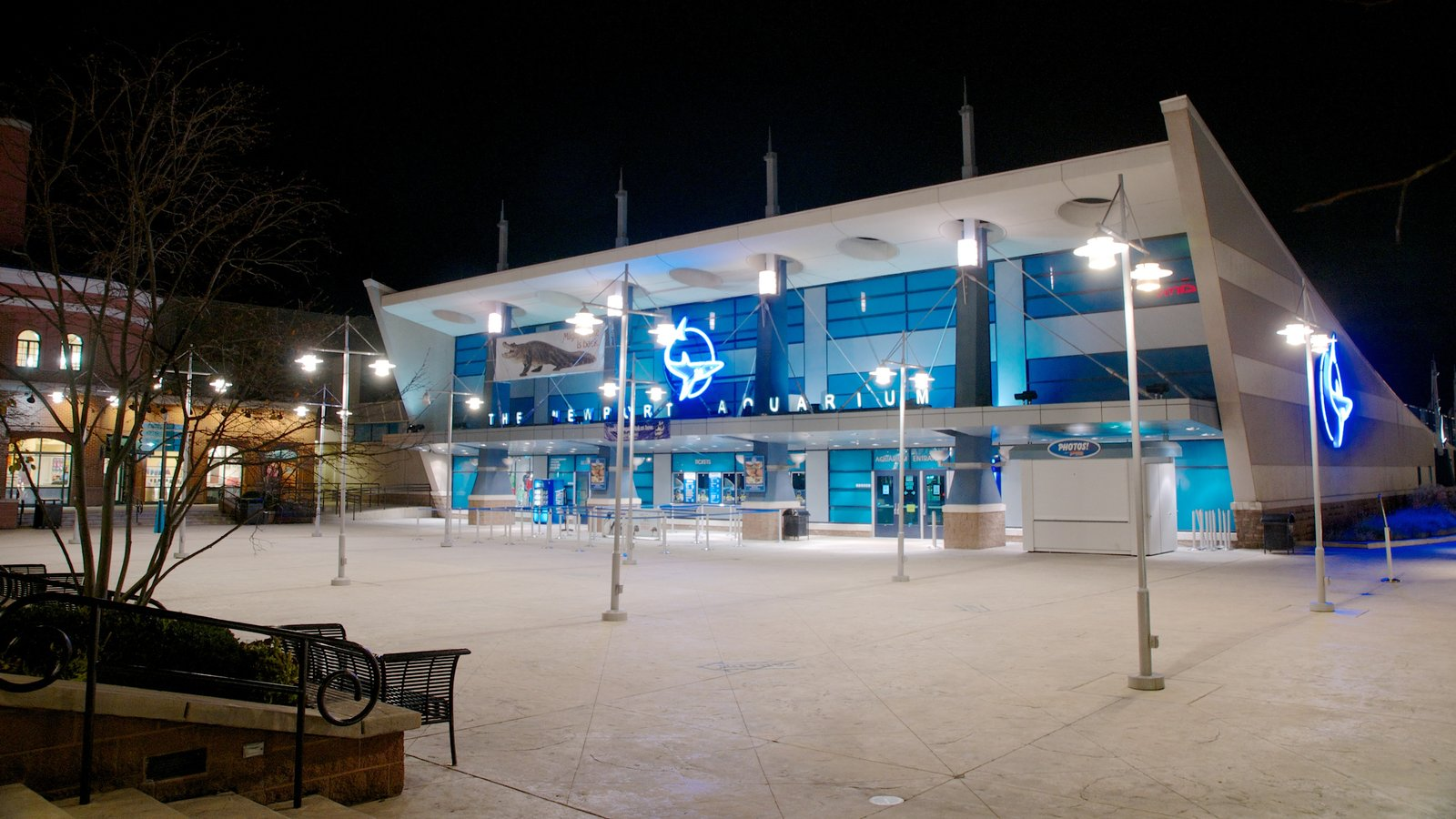 Newport Aquarium mostrando cenas noturnas e vida marinha