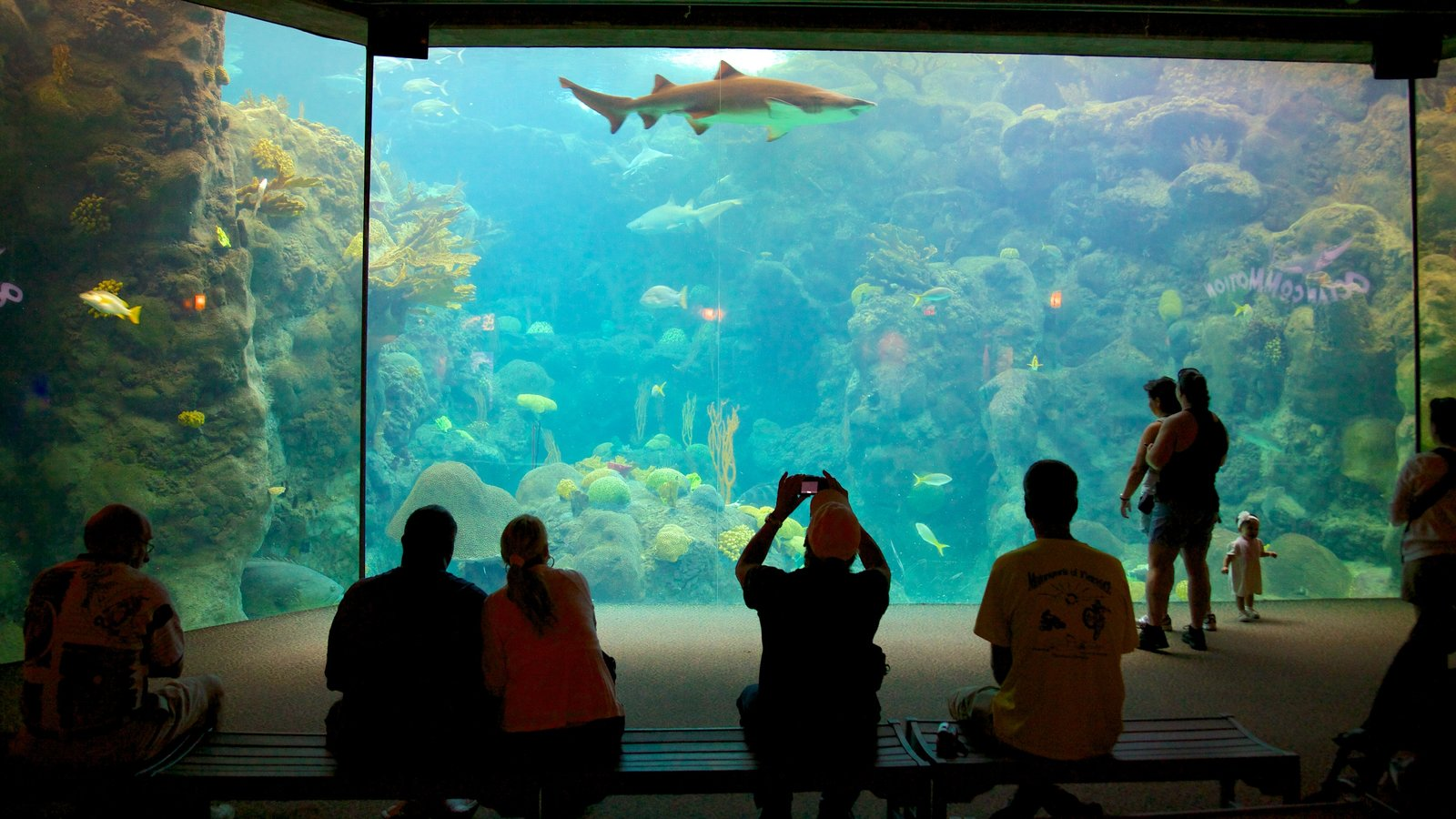 Florida Aquarium showing marine life, modern architecture and interior views
