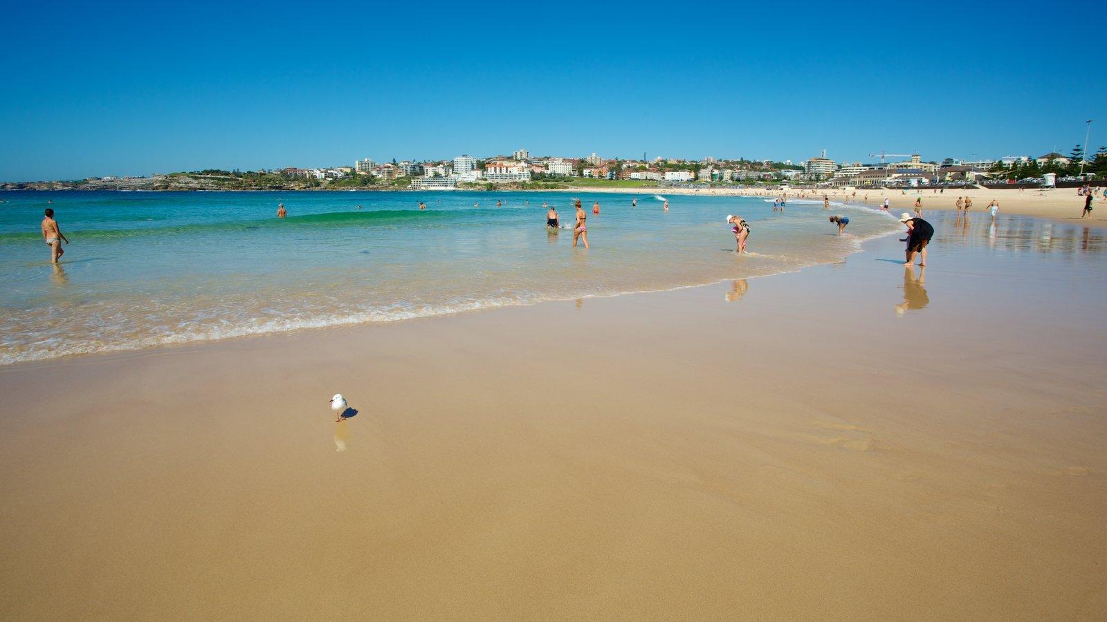 Bondi Beach which includes swimming and a sandy beach