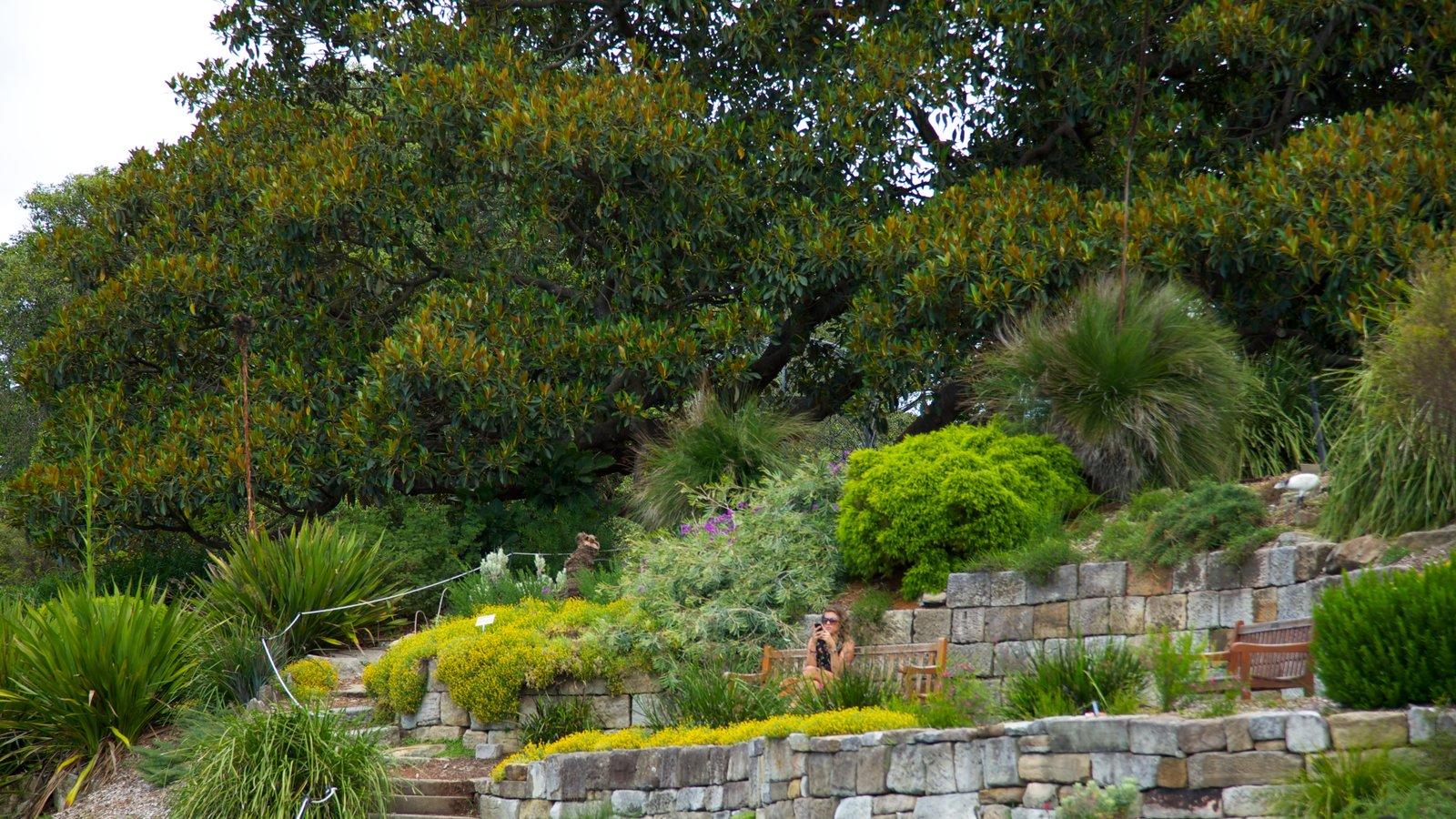 Landscape pictures view images of royal botanic gardens for Landscape gardeners sydney