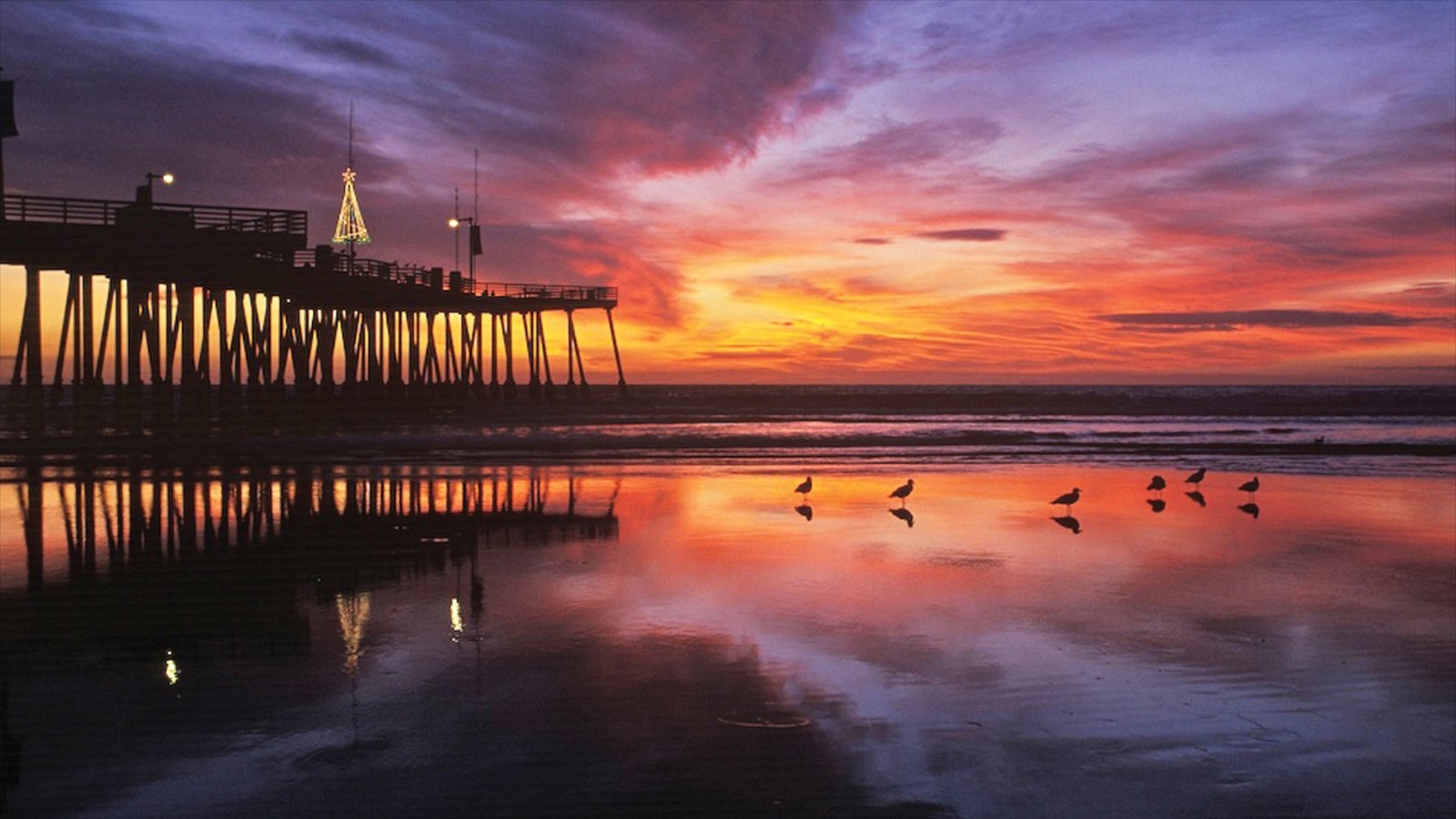 Pismo Beach Featuring A Sunset Views And Tropical Scenes