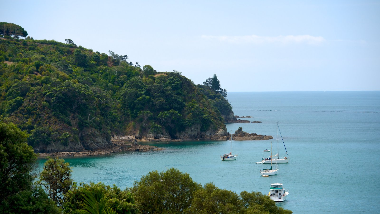 Waiheke Island featuring island images, forest scenes and general coastal views