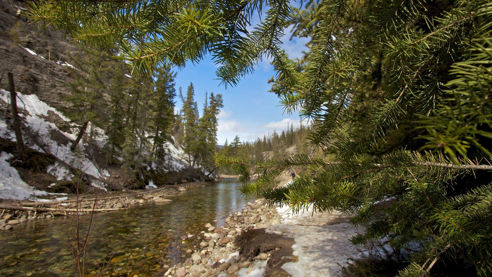 Jasper National Park ofreciendo escenas tranquilas y un río o arroyo