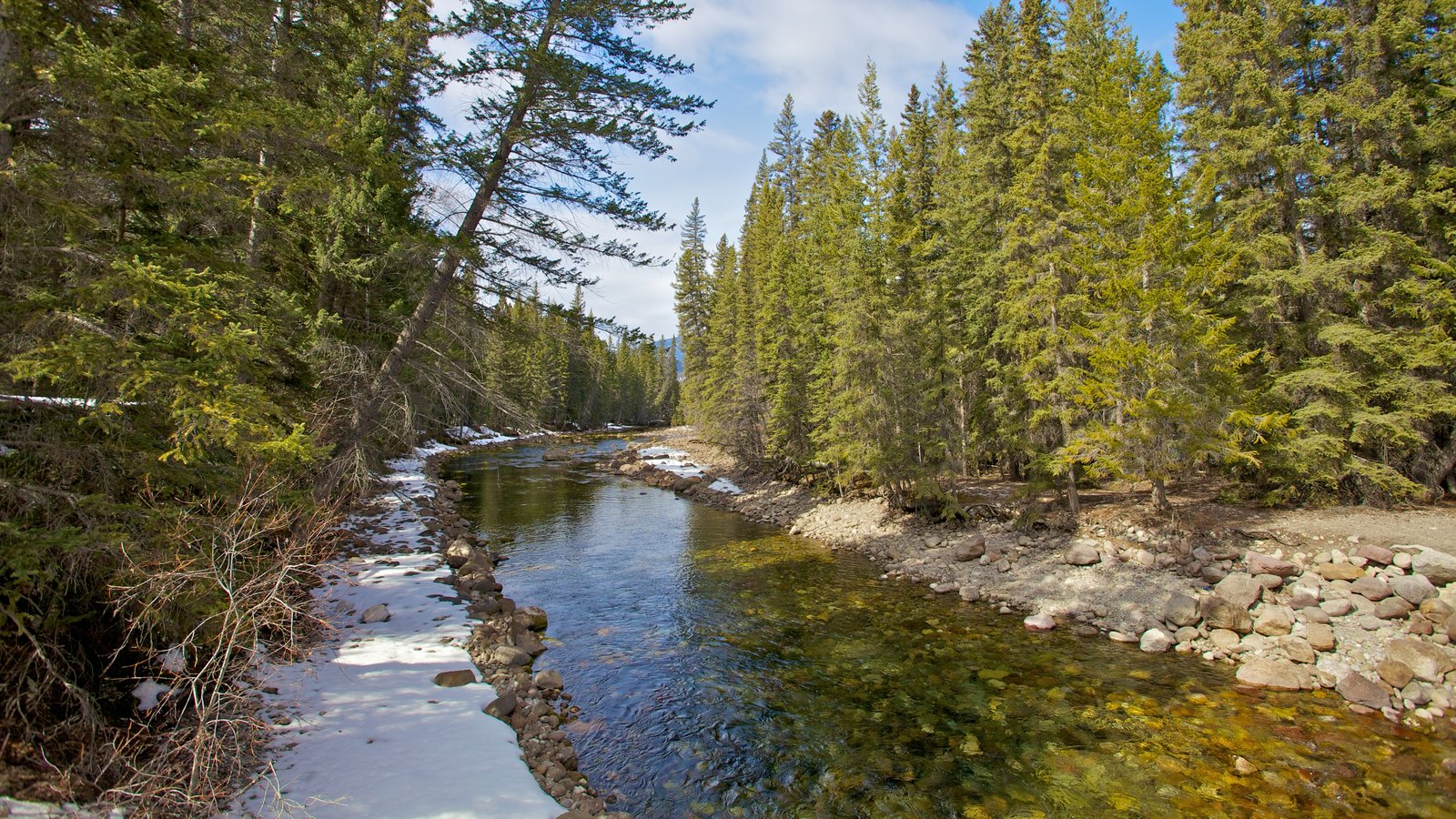 Jasper National Park which includes forest scenes and a river or creek