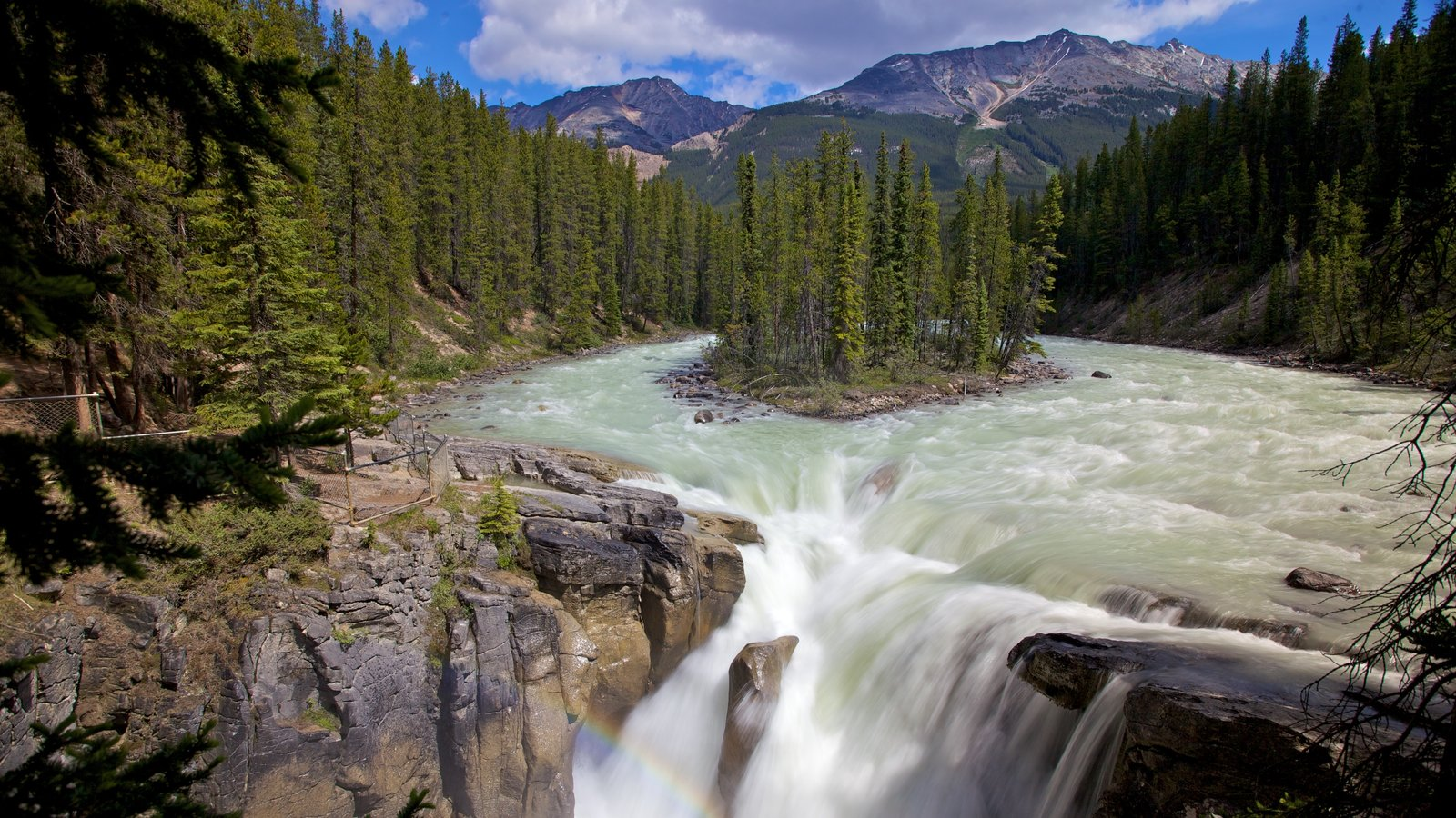 Sunwapta Falls showing forest scenes, landscape views and a waterfall